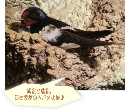 つばめの巣日本