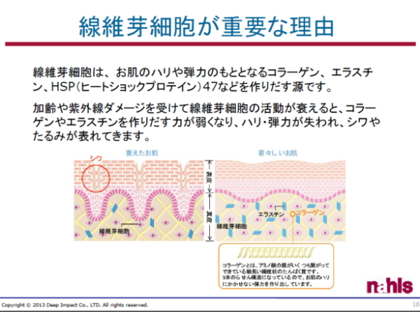 ナールスピュア資料. 線維芽細胞