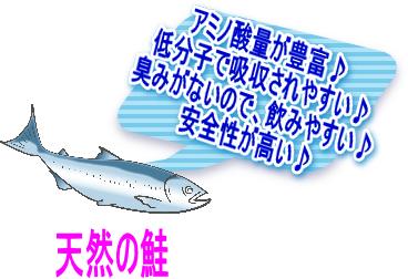 鮭のプラセンタ