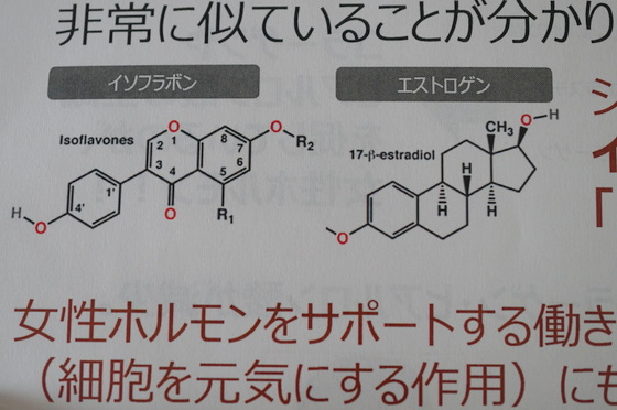 「植物性エストロゲンPhytoestrogen(フィト・エストロゲン)」