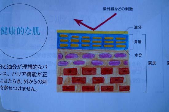 肌 バリア層