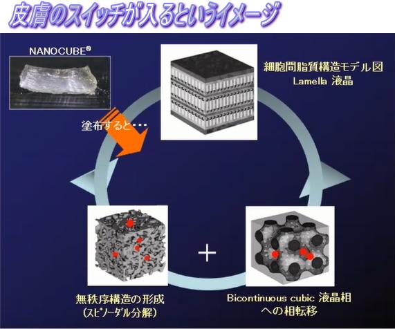 ナノキューブとラメラ構造肌のスイッチ